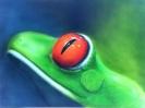 Costa_Rica-Frosch