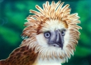 Philippinischer Adler
