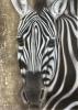 Zebra auf Leinwand